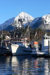 Alaska herring fishery fleet photo